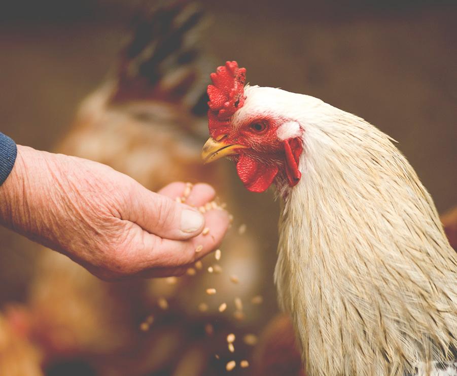 CS Led Solutions d'éclairage élevage